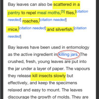 Bay Leaf..What is the Point?